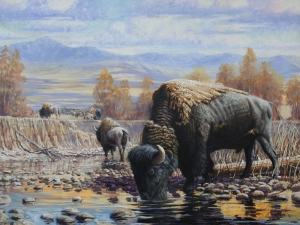Watering Bison